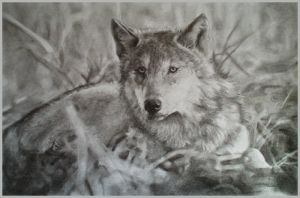 The gray wolf by kadiliis