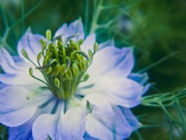 Pretty in Blue by barefootphotos