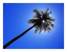 The palmtree by bsilvestre