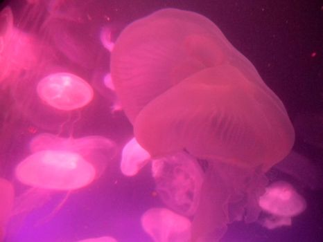 Jellyfish. by xXdarkbeautyXx