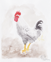 Watercolour White Rooster by GoldFlareon