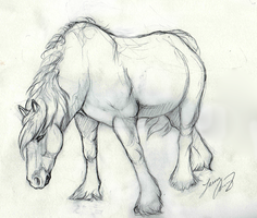 Pony Sketch by MorRokko