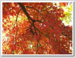 Fall colors by worldtraveler08