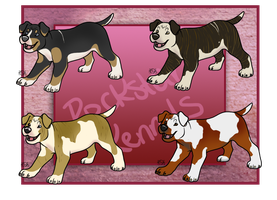 PitParade Imports Open One Left! by WinchesterCrossroads