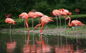 flamingos in Zoo by ingeline-art