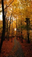 Follow the Yellow Tree Road by RollingFishays