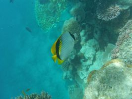 Great Barrier Reef 4 by Lozzar1999