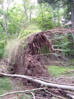 Uprooted Monster by BillReinhold