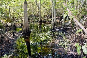 Yes this is a swamp.... by drewii57