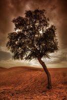 A Tree alone ... in the dune by Hamrani