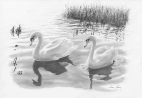 Swan Lake by Captured-In-Pencil