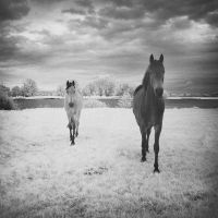 Horses Dream Infrared II... by MichiLauke