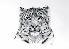 The Prince (Snow Leopard) by salt25