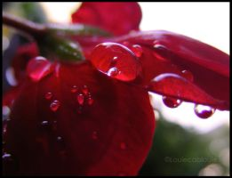 Red Tears by louiecablouie