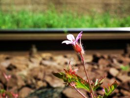 Railway Flower by Sadguardian