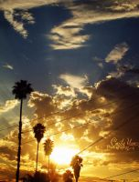 LA Sunset by ceciliay