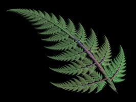 Apophysis Green Fern Frond by Gibson125