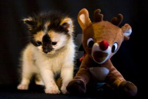 Kitten with Rudolph by Nebey