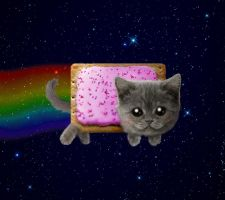 Real Life Nyan Cat by NarutoMustDie842