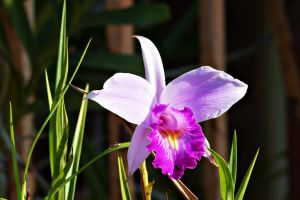 Wild Orchid flower 2 by a6-k