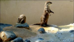 Loutre debout by Dkyo