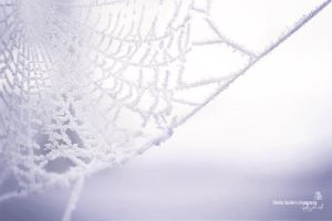 icy winter spider web by Burder
