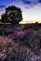 Dunwich Heath 1d. by Wayne4585