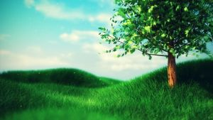 Grassy Field Wallpaper by robertllynch