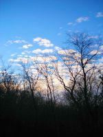 Trees and Clouds 1 by natureflowerstock