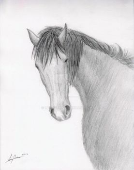 Horse sketch by LuisaVFM