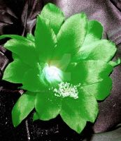 green cactus flower by peaceocake