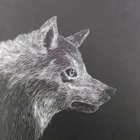 Scratchboard Wolf by ourownprophecy