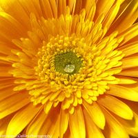 Shining like the sun by FrancescaDelfino