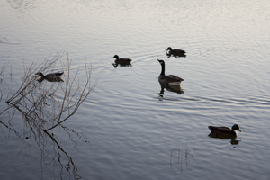 Birds of a feather... by MaryahDPhotography
