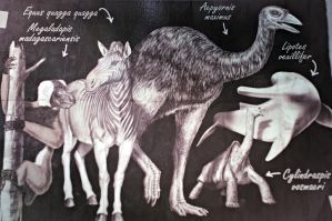 Explanations about the extinct animals by Lynus-the-Porcupine
