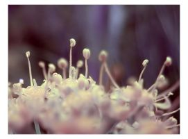 Funky Fennel by nonperson