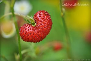 Wild Strawberry by Pebels