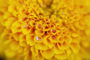 droplets hiding by OrestisCharalambous