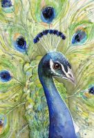 Peacock Watercolor Portrait by Olechka01
