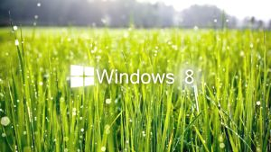 Windows 8 grass by midhunstar