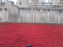 Remembrance poppies at the Tower of London by Londonexpofan