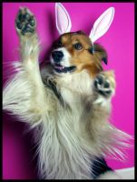 Easter Doggy IV. by ElectedTheRejected