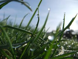 grass in the morning 2 by TheSiubhan