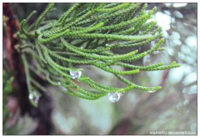 winter water droplets 6 by Sophie-Y