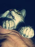 My cat.. by A-aN-nA-a