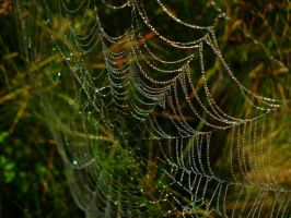 Web by awayfromhomee