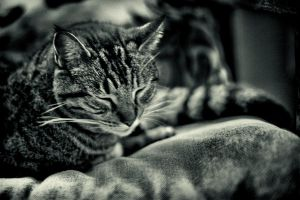 Barn Cat in Repose by clippercarrillo