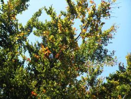 Autumn4: Greennes of the Time by brego