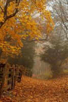the forest scene by chirilas