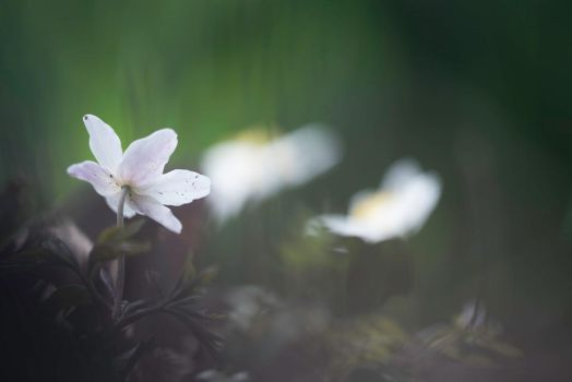 spring by Blubdi-Photography
